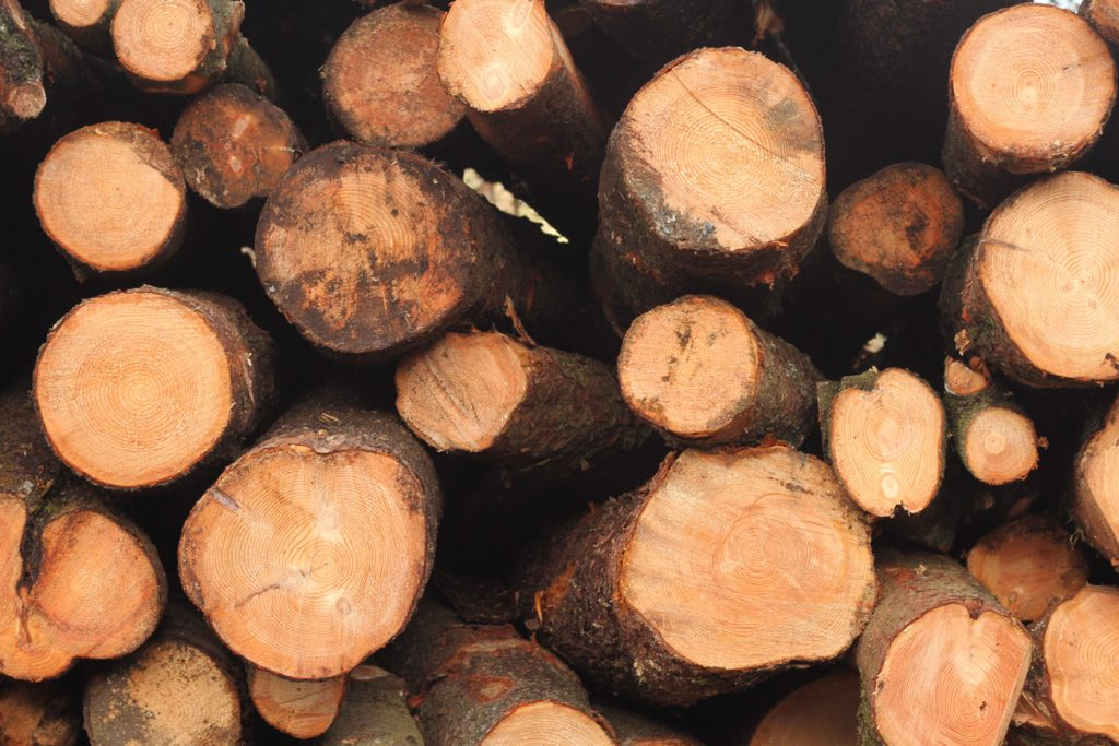 A photograph of the cross section of an array of cut cedar, with an orange-brown hue on the timber and concentric rings showing the tree ages