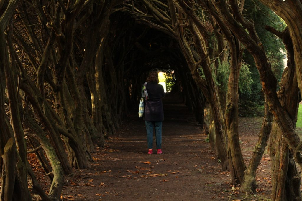 An image of a corridor of trees that meet above the head, with a person standing facing away from the camera in light winter clothing inside the corridor