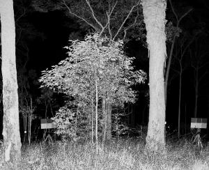 SALCA forest image