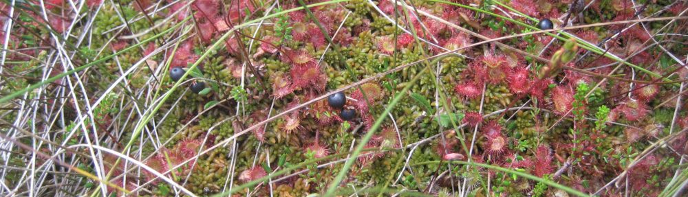 Blog from the bog – and beyond