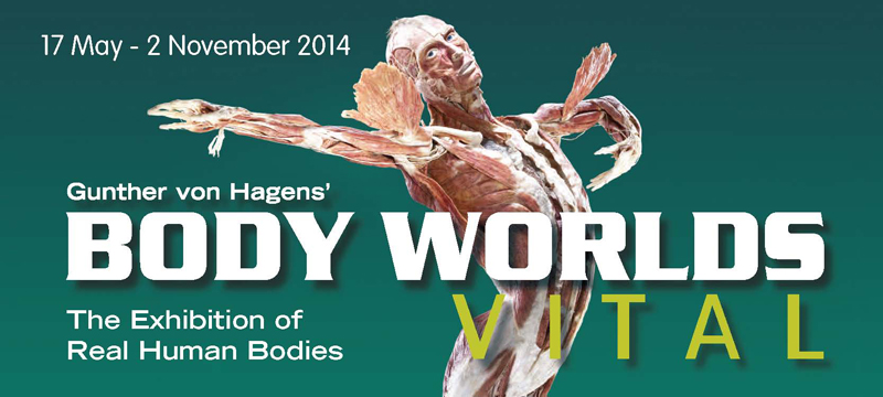 body-worlds-vital---the-exhibition-of-real-human-bodies-body-worlds-vital-life-science-centre-800x360