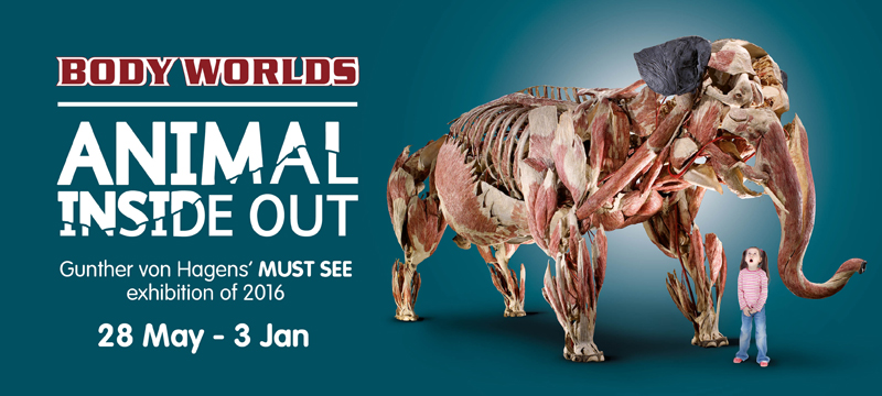 animal-inside-out-a-body-worlds-production-59839-gw-life-aio-home-page-banner-800x360px