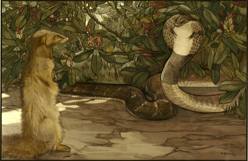 'Rikki Tikki Tavi the mongoose and cobra' by Charles Maurice Detmold for Rudyard Kipling's The Jungle Book, 1902 (Pollard Collection)