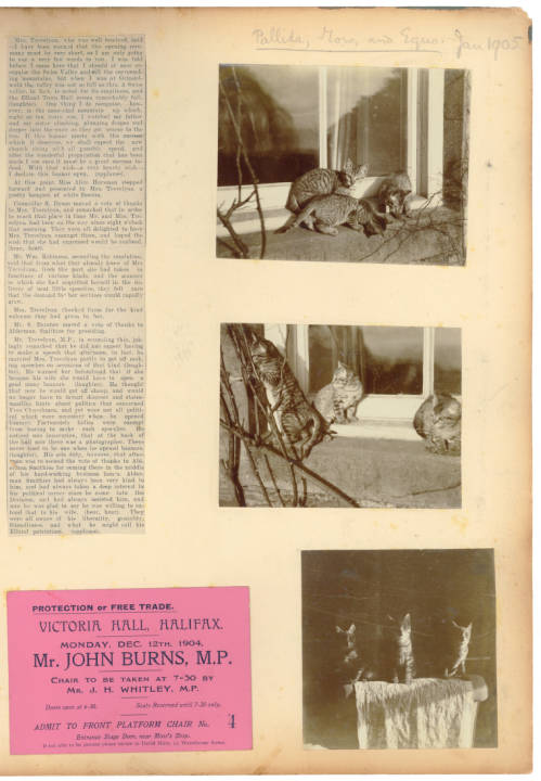 Album page containing photographs of cats, a newspaper clipping and ticket for an event.