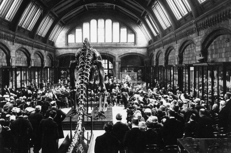 The unveiling of Dippy in 1905
