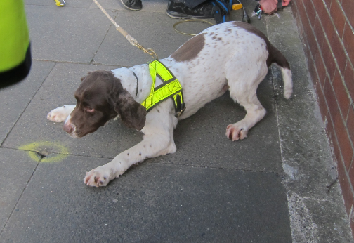 Sniffer dog in high vis detecting a gas leak