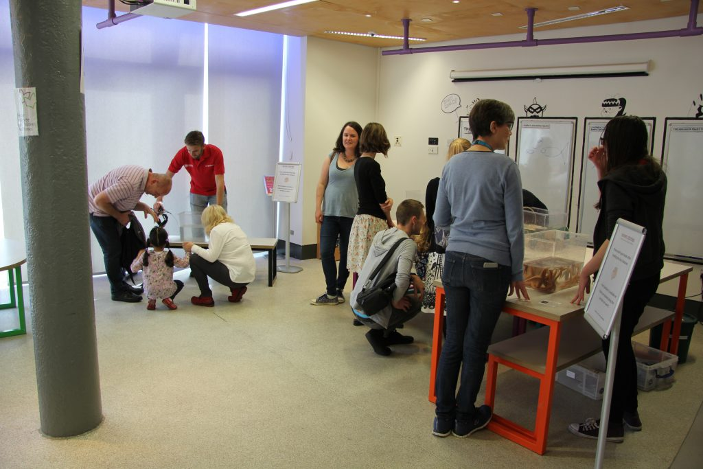 Visitors taking part in the animal handling sessions. Image: Newcastle University