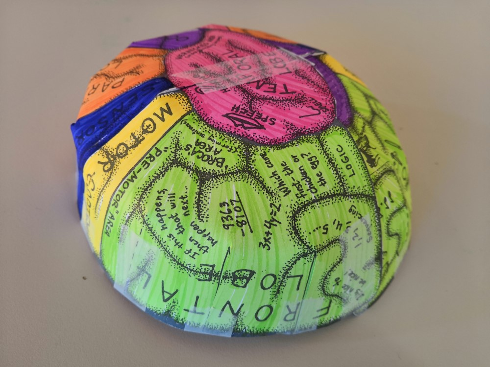 Making cardboard brains as part of the 'What Makes Us, Us?' weekend. Image: Newcastle University